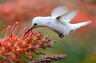 21 Stunning Hummingbird Photos You Need to See