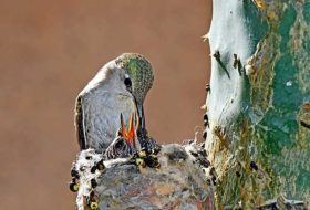 This Birder Found a Hummingbird Nest and What She Did Next Will Warm Your Heart