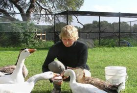 These Wildlife Rehab Centers are Doing Amazing Work for Birds and Other Wild Animals