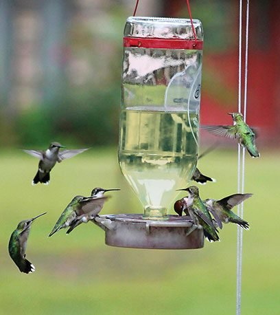 bird humming tube feeder feeders classic pagespeed best highview hummzinger xhummzinger glass saucer vacuum ic reviews hummingbird vs