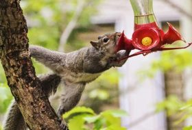 Caption This! A Stolen Sip from a Hummingbird Feeder