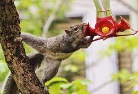 Caption This! A Stolen Sip from a Hummingbird Feeder