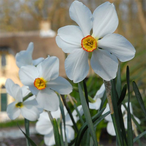 10 of the Best Daffodil Bulbs to Plant This Fall - Birds and Blooms