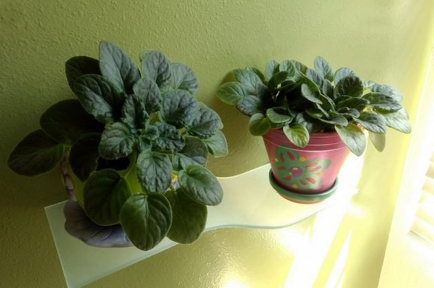 Growing African Violets E Somers