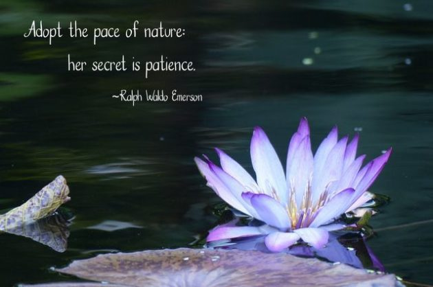 Nature Quotes | Nature Quotes About Birds Gardening And More Quotes About Nature