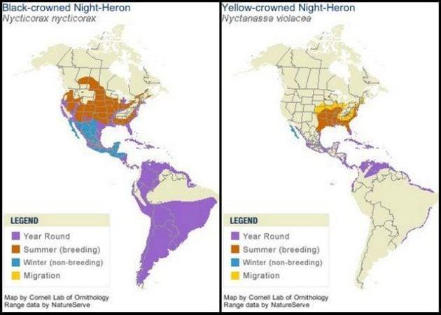Night Heron Ranges Cornell Lab of Ornithology