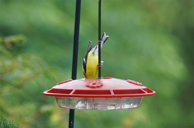 How To Make Food For Your Hummingbird Feeder