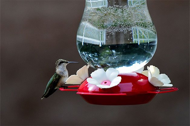 13 Questions About Hummingbird Feeders Answered By The