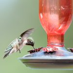 13 Questions About Hummingbird Feeders Answered by Experts