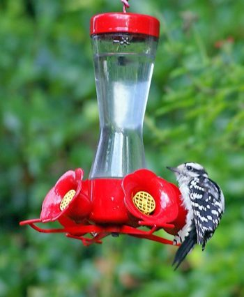 13 Questions About Hummingbird Feeders