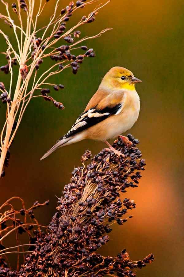 25 Dazzling Fall Bird Photos You Need To See Birds And Blooms