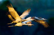 25 Dazzling Fall Bird Photos You Need to See