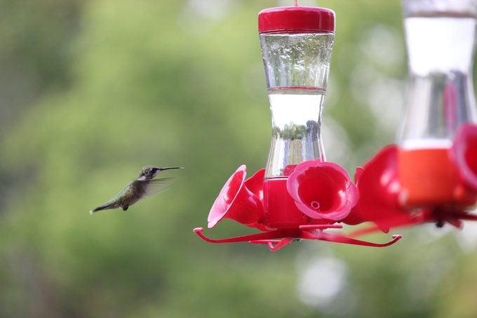 hummingbird at a sugar water feeder