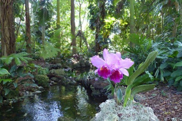Growing Orchids Cattleya 3