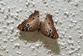 My Hurricane Irma Butterfly