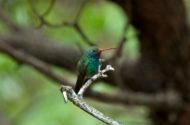 Keep Those Feeders Up for Late Hummingbirds