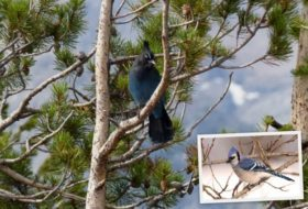 Western Birds and Their Eastern Counterparts