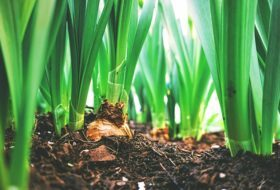 Why You Should Plant Spring Bulbs Now