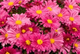 Top 10 Fall Flowers for a Perennial Garden