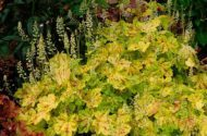 Top 10 Gold Plants for Your Garden