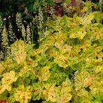 Top 10 Golden Plants to Make Your Garden Glow