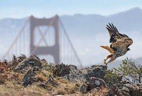 6 Must-Visit Hawk Migration Hot Spots