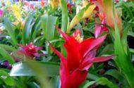 Grow Bromeliads