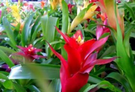 Grow Bromeliads for Easy Indoor Color