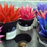 Let's Talk About Painted Succulents