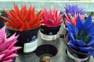 Painted Succulents 2