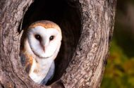 Owls of North America: Meet Your Nocturnal Neighbors