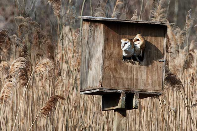 how to attract owls to nest boxes