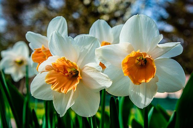 The ultimate guide to planting spring bulbs birds and blooms the four basics of spring bulbs mightylinksfo