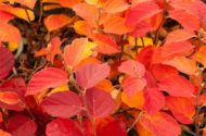 9 Best Fall Shrubs to Grow This Season