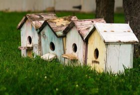 Ask the Bird Experts: When Should I Clean Out My Birdhouses?