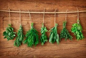 How to Dry and Store Garden Herbs