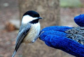 4 Foods to Feed Birds in Winter