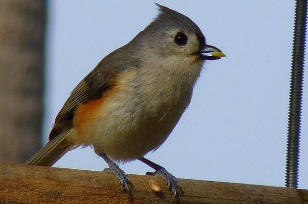 Bird Feeding Habits