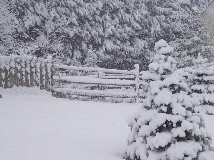 snow winter shrub covers Kathy Loraw 2
