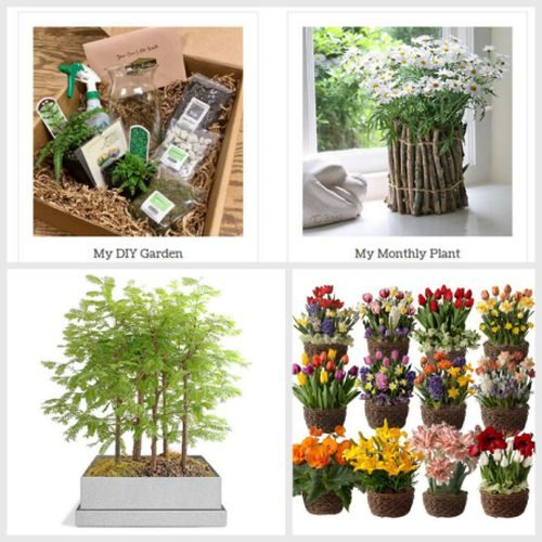 Plant Gifts 3
