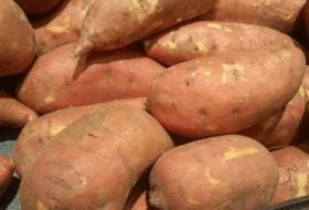 Sweet Potato Facts for Thanksgiving Dinner