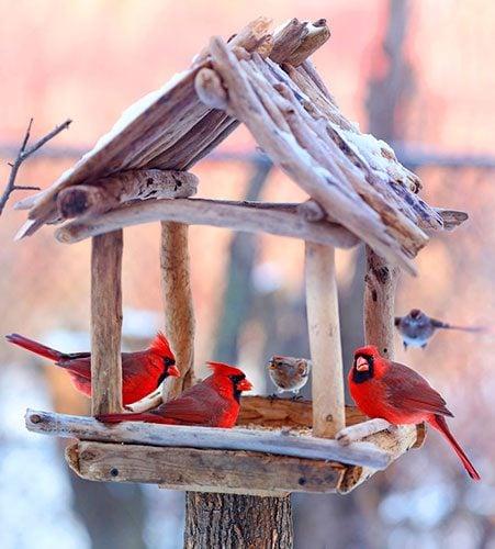 cardinals and sparrows on bird feeder