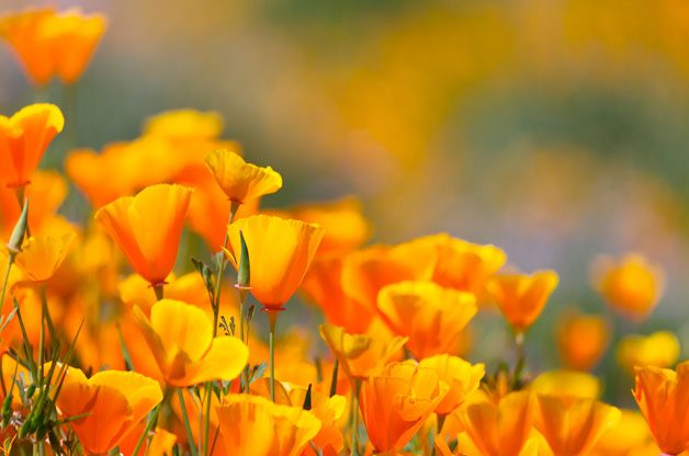 fast growing annuals