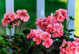 Top 10 Hard-to-Kill Houseplants