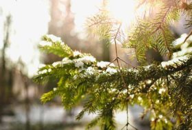 Ask the Garden Expert: How Do I Protect Backyard Shrubs From Winter Weather?