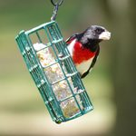 8 Common Questions About Suet for Birds