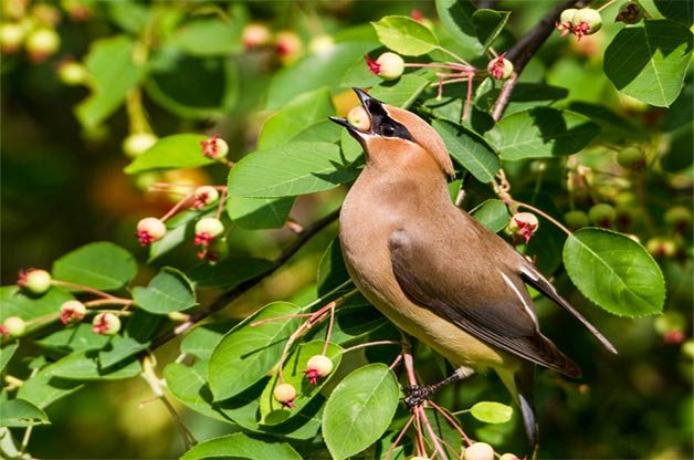 Image result for birding plants