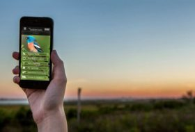 5 Birding Apps to Give Your Skills a Boost