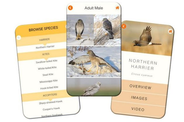 Birding Apps Hawk ID image