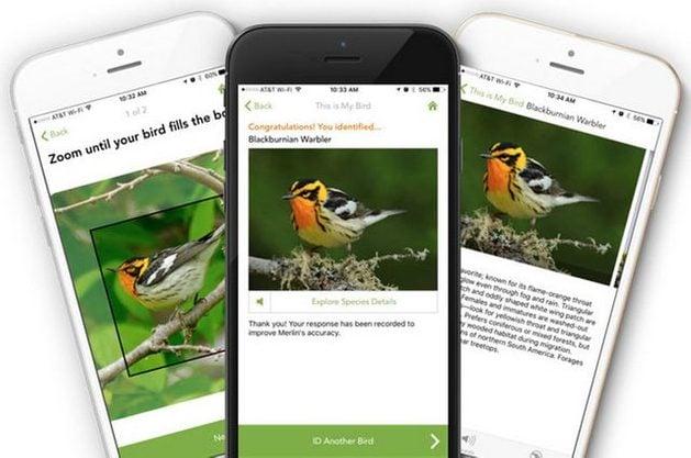 Birding Apps Merlin App image